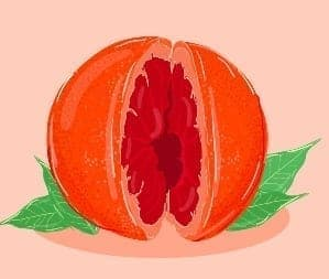 The complicated Trurh About The Perfect Vagina